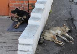 После нападений собак на жителей возбуждено уголовное дело