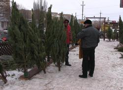 Елки на базарах Саратова продают в среднем по 500 рублей