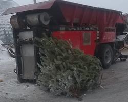 Жителей области просят не выкидывать елки в контейнеры для ТКО