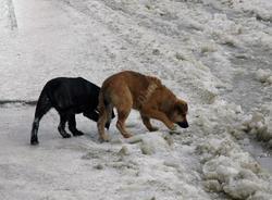 Мэр потребовал 'незамедлительно' возобновить отлов собак