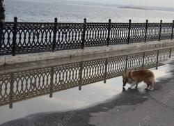 На набережной просят обустроить площадку для собак