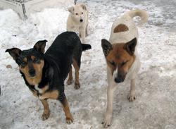 Депутаты разошлись во мнениях о решении проблемы бродячих собак