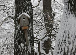 После сильного снегопада прогнозируют похолодание