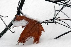 В городе - снег с дождем и ветром