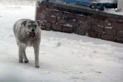 Радаев поручил 'оперативно' разобраться со снегом и собаками