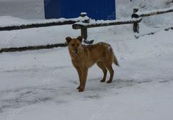 Мэрия намерена в марте выполнить годовой план по отлову собак