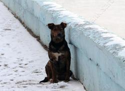 Мэрия пообещала сделать площадку для выгула собак на набережной