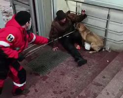 Охранявшая пьяницу собака бросалась на посетителей магазина