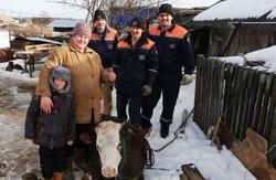 Спасатели вызволили провалившуюся в погреб корову