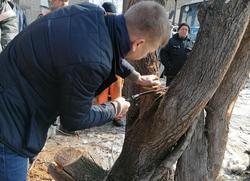 Сотрудников 'Дорстроя' учили правильно обрезать деревья