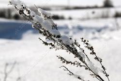 В городе - мартовские мороз и солнце