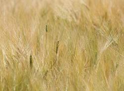 Аграриям не обещают поддержку для сдерживания цен