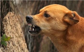 В Красноярске стая бездомных собак напала на 9-летнюю девочку
