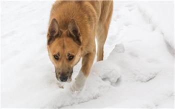 В Красноярске вновь ищут подрядчиков для отлова собак