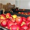 На красноярском рынке нашли зараженные вредителями фрукты. Их не сожгли, а вернули на прилавки