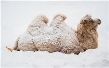 В красноярском зоопарке показали реакцию животных на снегопад