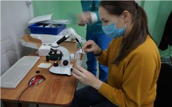 Погружение в науку: старшеклассников Шарыпово приглашают на обучение в интенсивную школу