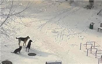 260 собак отловили в Красноярске с начала года: опасных псов-рецидивистов поместили в приют