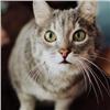 Выбросившего кошку в мусоропровод красноярца оставили на свободе