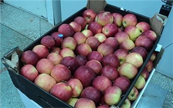 В Канске бульдозером раздавили запрещенные ко ввозу яблоки
