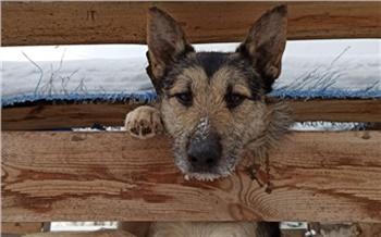 Администрация Ленинского района Красноярска навела порядок в собачьем приюте «Алькин Дом»