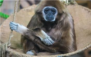 В красноярском зоопарке открыли экспозицию с приматами. Посетителей просят не шуметь