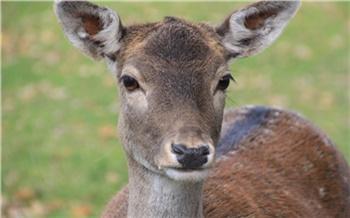 Убивший косулю боготольский браконьер возместил ущерб в пятикратном размере и остался на свободе