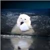 У медведей в красноярском зоопарке начался купальный сезон