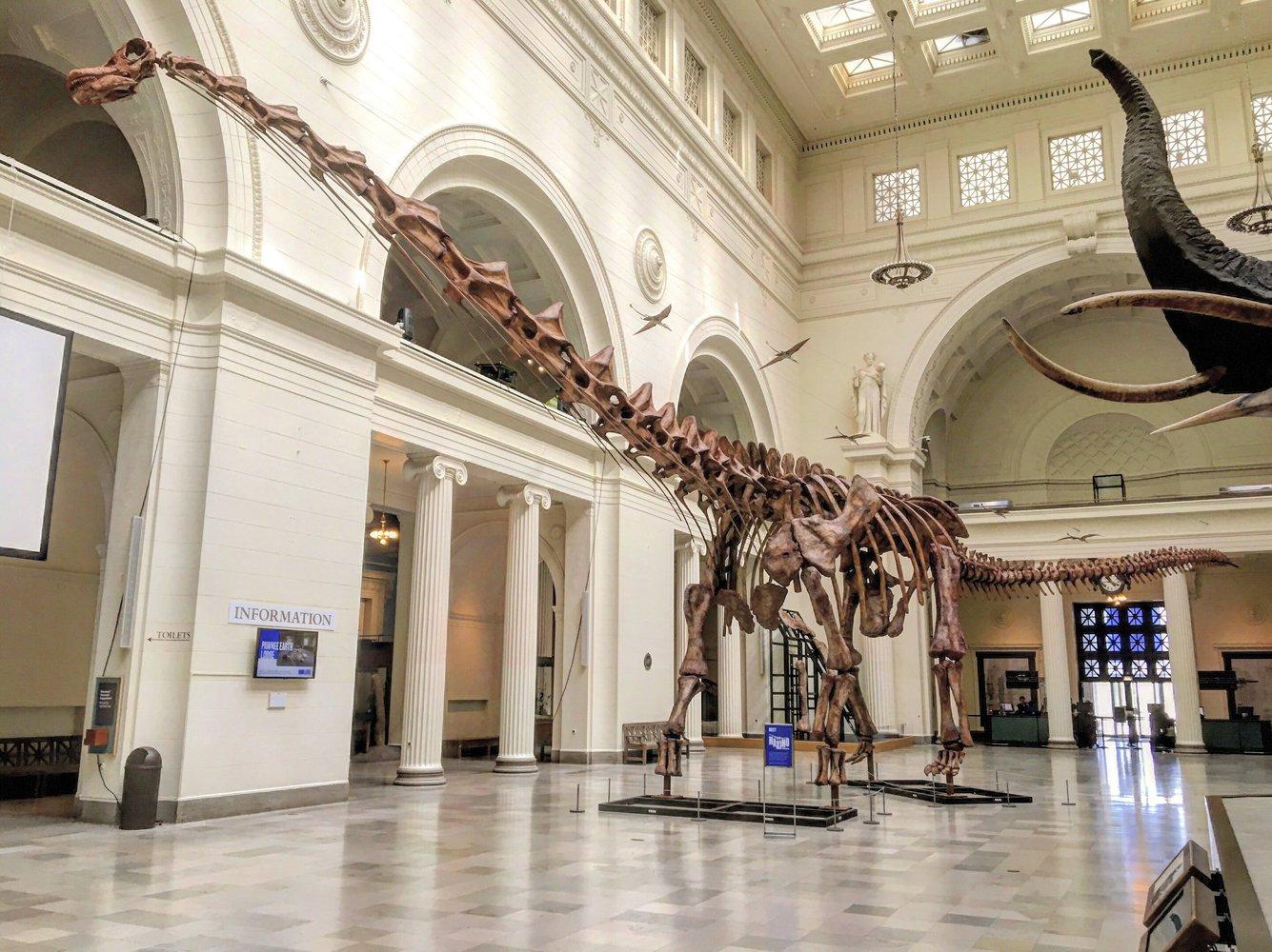 В Аргентине обнаружили древнейшего титанозавра