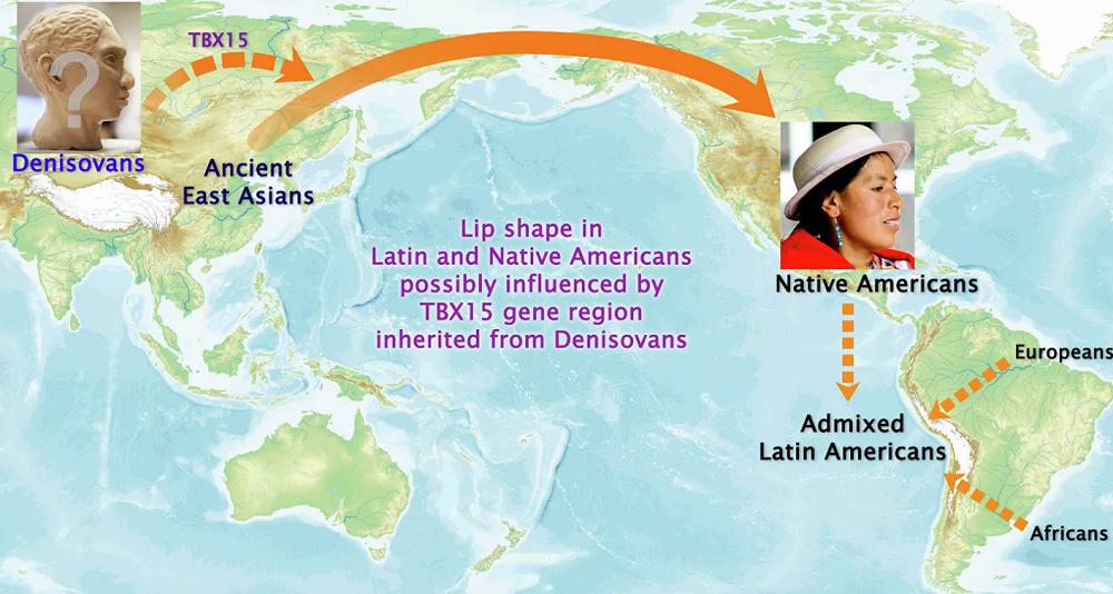 Индейцы унаследовали форму губ от денисовцев