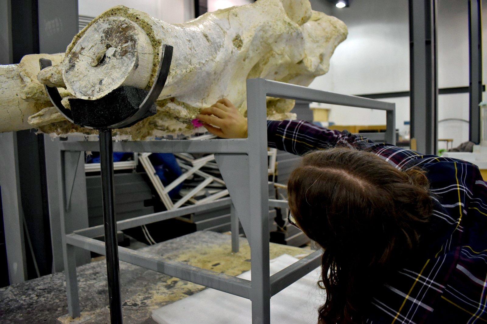 В Турции обнаружили череп слона возрастом 7,5 млн лет