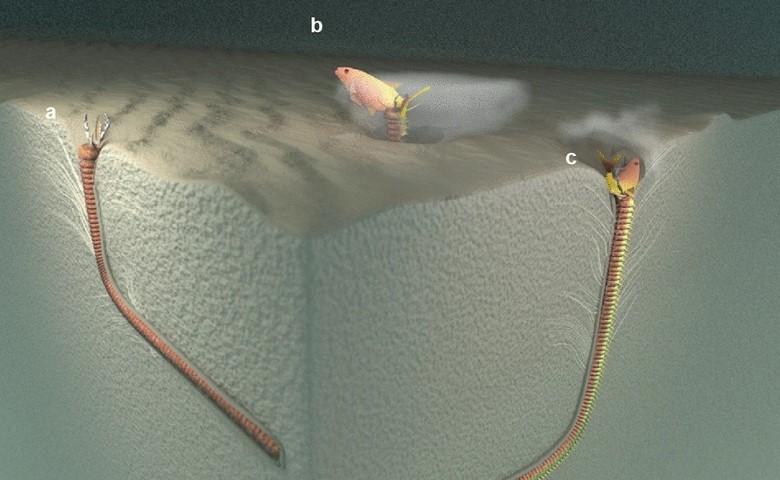 На Тайване найдено логово древнего гигантского червя