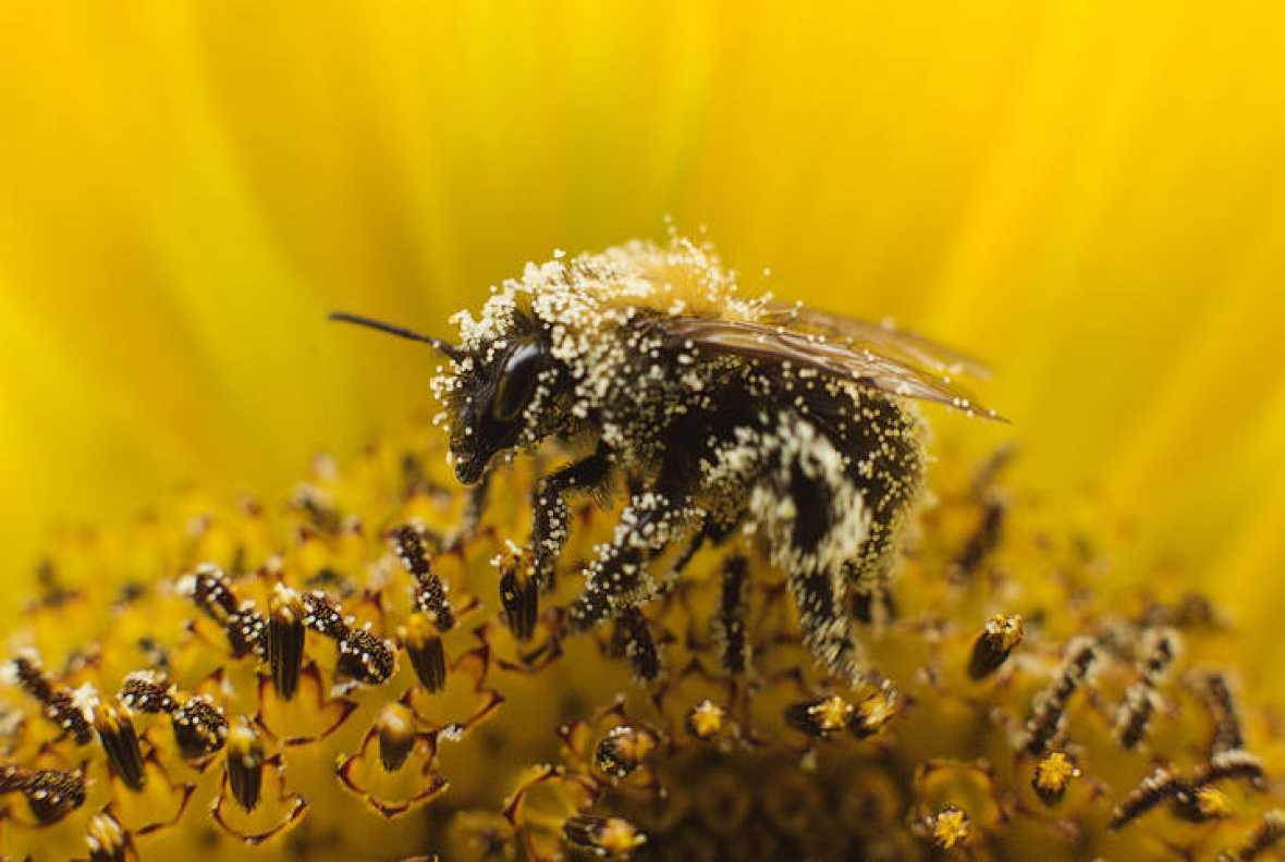 Люди их ненавидят: экологи заявили, что Земля ежегодно теряет до 2% насекомых
