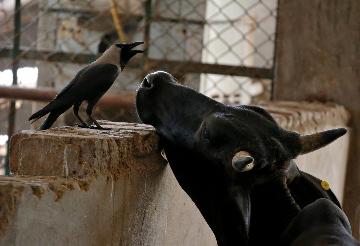 В Украине запускают программу контроля качества молока