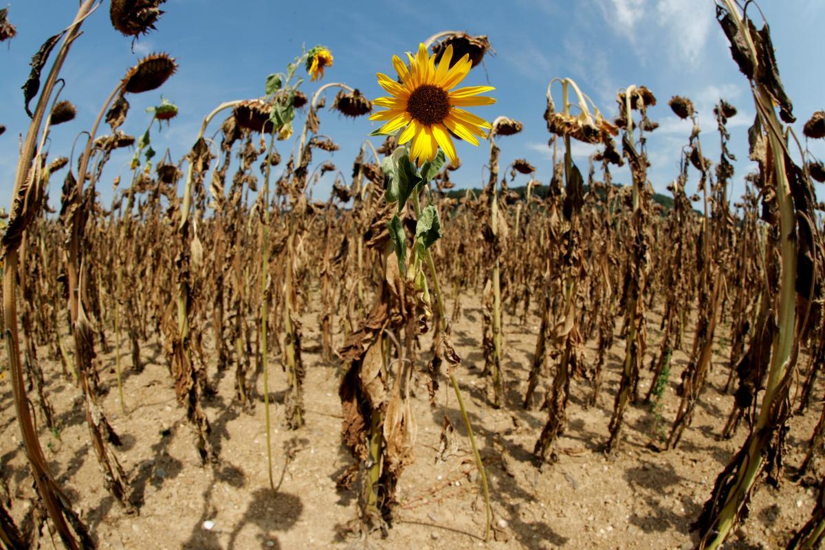 Пострадают в первую очередь самые бедные: Совбез ООН признал изменение климата серьезнейшей угрозой безопасности мира