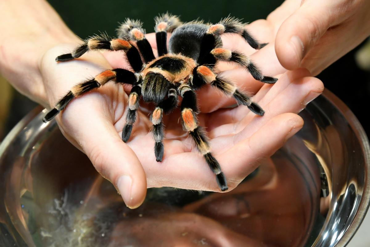 Ученые узнали об опасных бактериях на клыках некоторых пауков