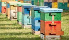 Ответят за гибель пчел