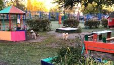 Бродячие псы ворвались в кемеровский детский сад