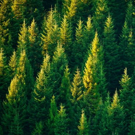Рослесхоз прокомментировал нововведения в правовом регулировании лесных отношений
