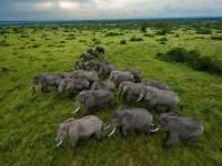 Власти Ботсваны направят в Анголу тысячи слонов