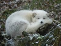 В Приморском крае обнаружен неизвестный науке зверь
