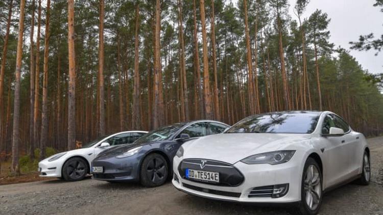 Строительство завода Tesla под Берлином затягивается. Сроки сорвали змеи и ящерицы