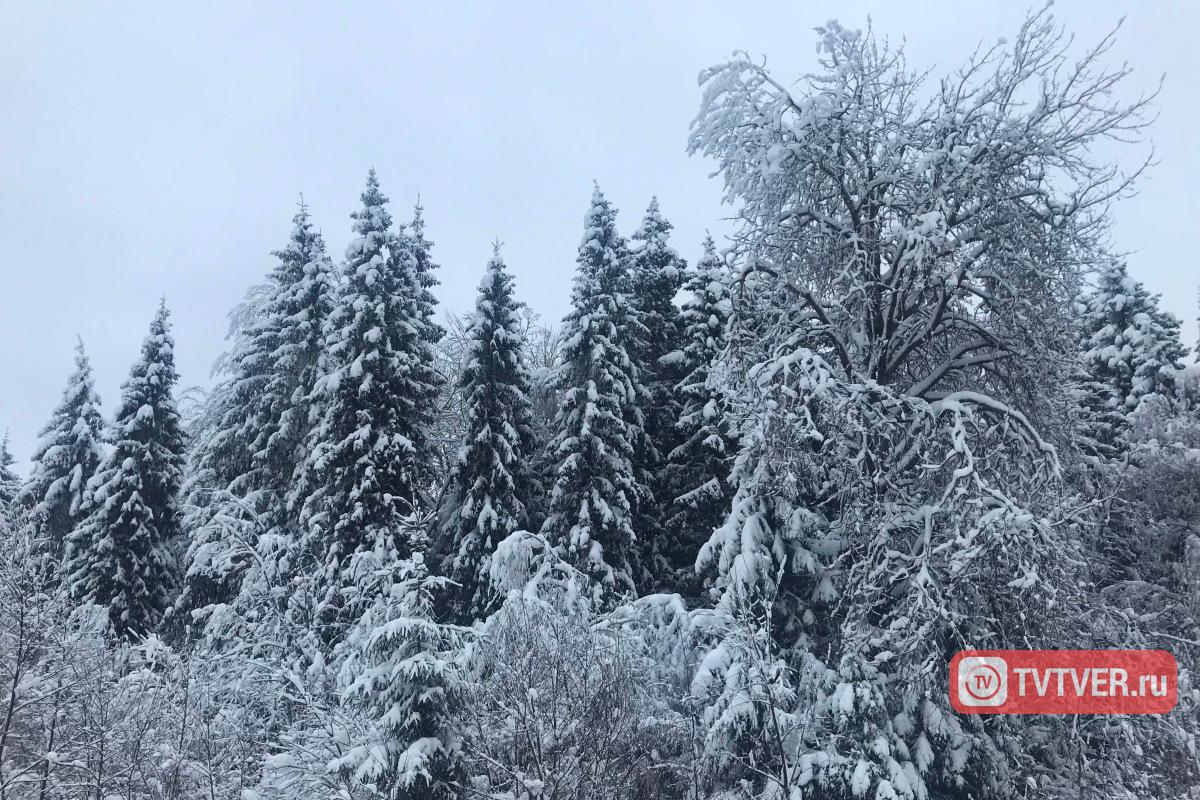 Более 470 гектаров пашни стали лесом в Тверской области