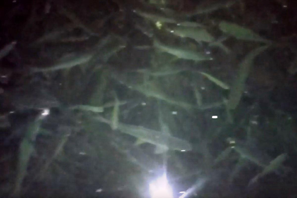 В Тверской области сняли на видео спасающуюся от гибели рыбу и что-то булькающее рядом