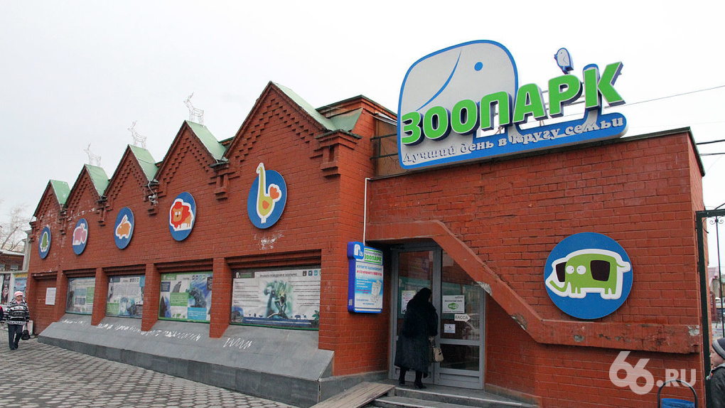 «У нас нет аховой ситуации»: директор екатеринбургского зоопарка — о переезде, который планируют 70 лет