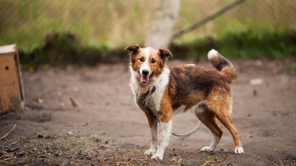 Критерии выбора вольера или будки для собак