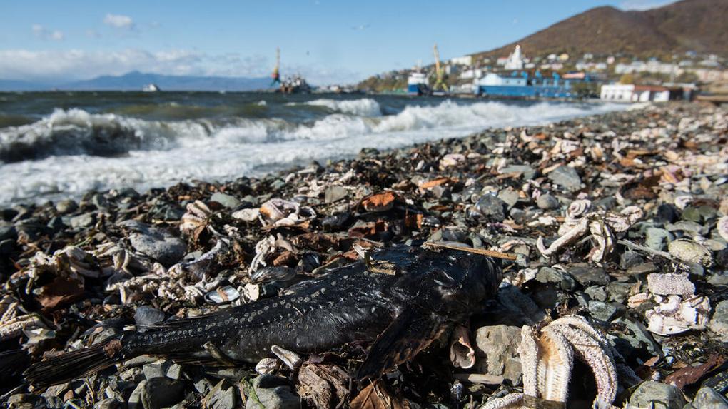 Экологи установили причину катастрофы на Камчатке