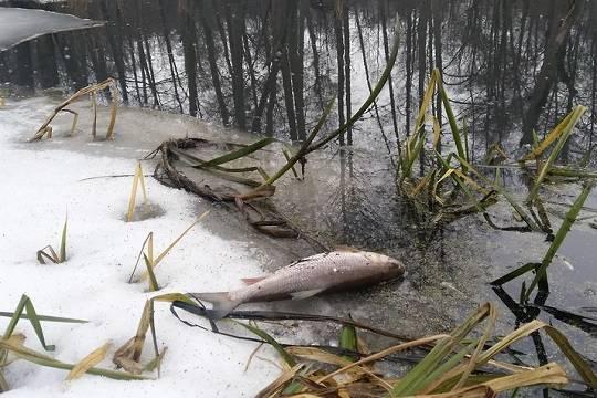 Росприроднадзор оценил ущерб от загрязнения реки Усмань в Липецкой области