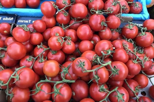 Россия решила временно отказаться от томатов из Турции, Армении и Азербайджана