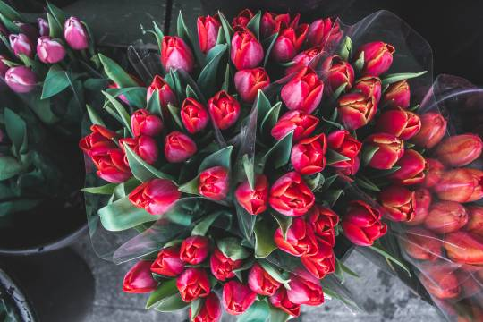 Россиян предупредили о рекордном росте цен на цветы